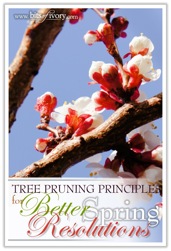 Tree Pruning Principles for Better Spring Resolutions | www.bitsofivory.com