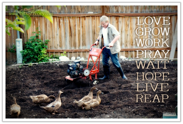 Of Boys, Dirt and Ducks - My favorite four-letter words of gardening | www.bitsofivory.com