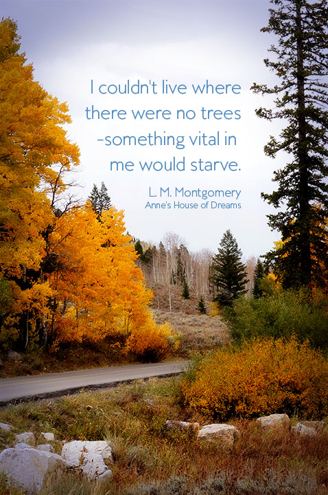 Autumn photograph with Anne of Green Gables quote