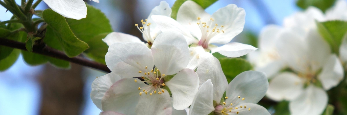 bushelsandlight-rotating-appleblossom